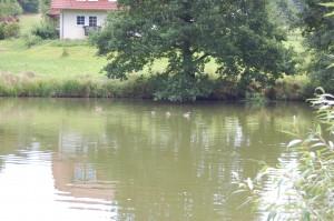 Sommer Mölmeshof 2013 027